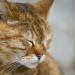 Thumbnail for Animal Pain Awareness Month